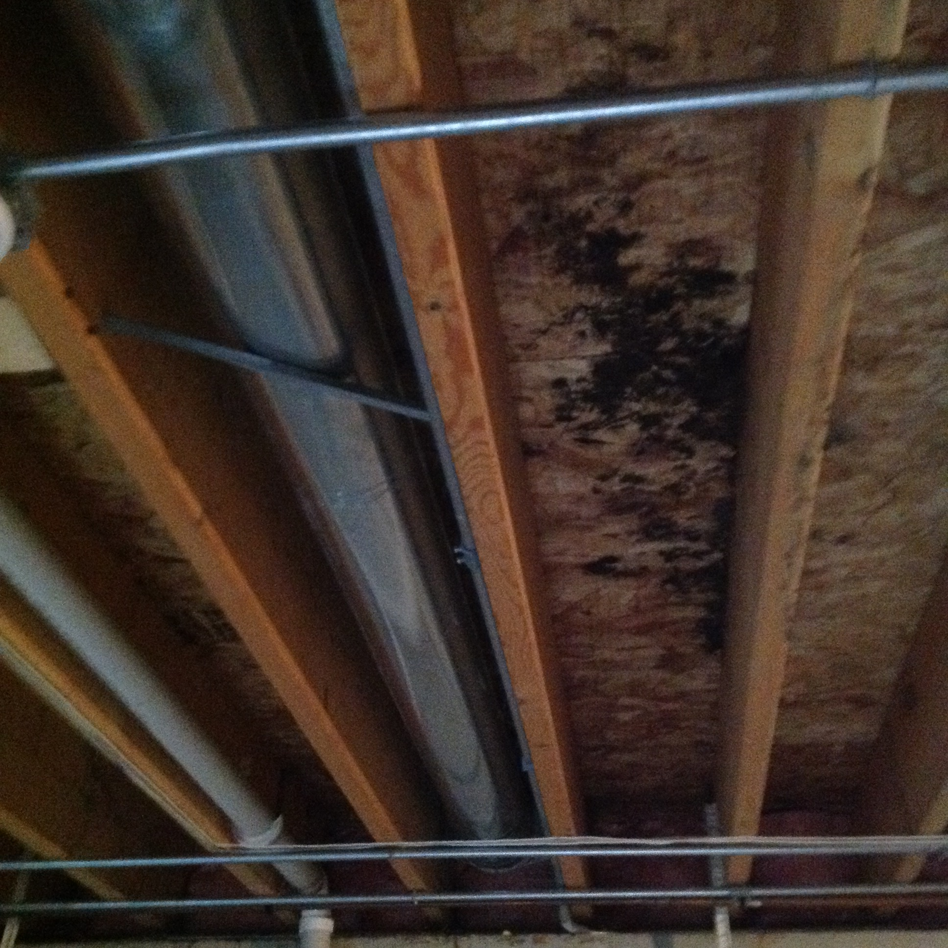 Get A Free Mold Removal Cost Estimate Today